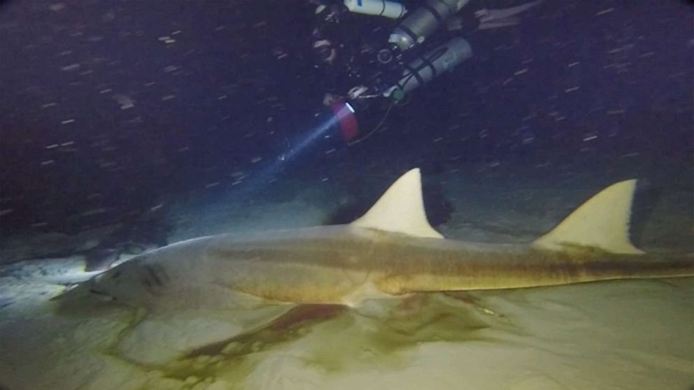 Florida Blue Hole reveals 2 deceased sawfish